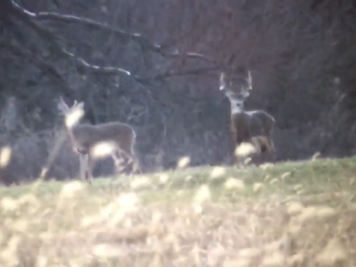 A Late Season Buck at Shuhart Creek Whitetails