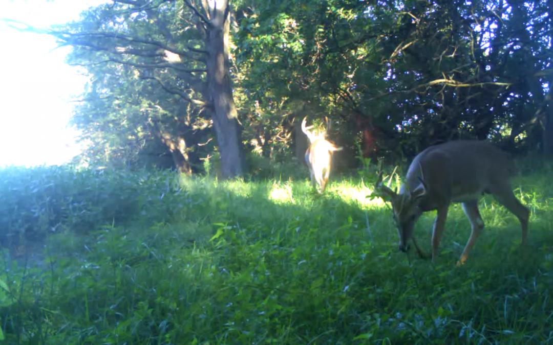 Shuhart Creek Whitetails Illinois Deer Hunt Hancock County Illinois