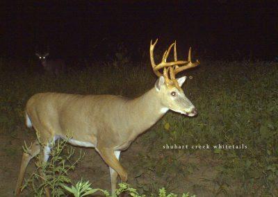 Shuhart Creek Whitetails Trailcam Deer