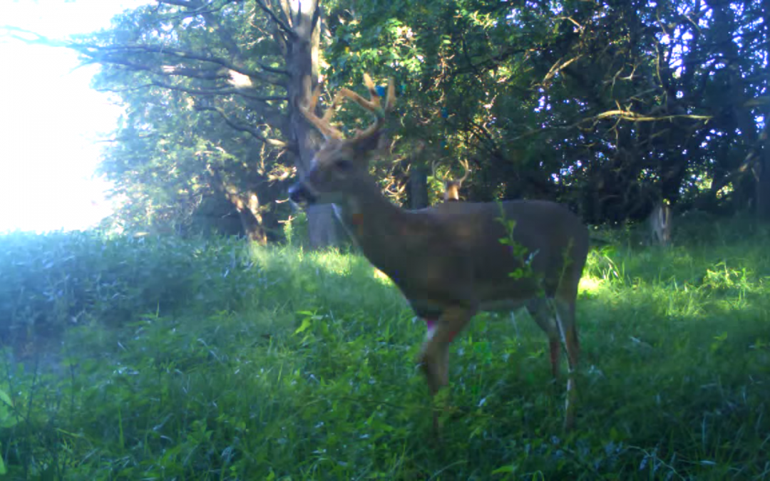 Deer Movement September 2014