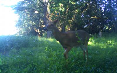 Deer Movement September 2014