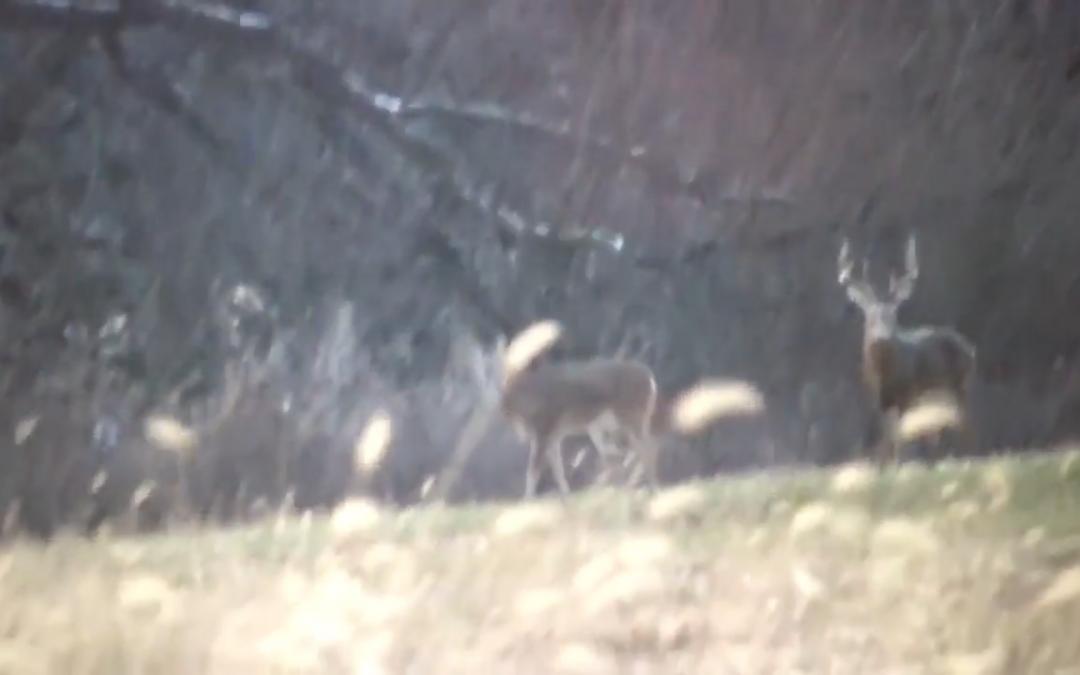 Late Season Buck at Shuhart Creek Whitetails