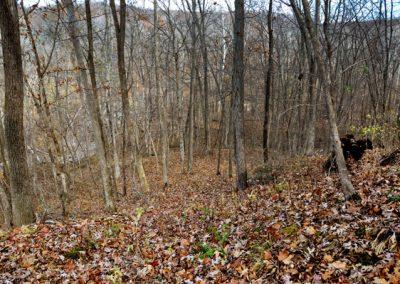 Shuhart Creek Whitetails Photo Hunting Property