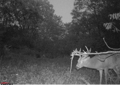 Shuhart Creek Whitetails Covert Trailcam Deer